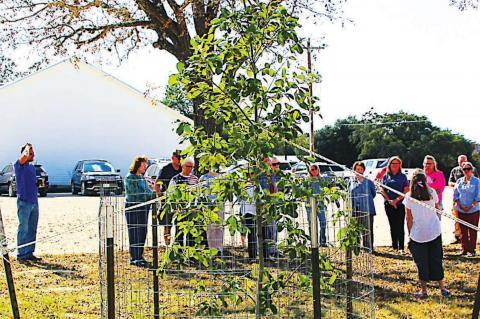 CLUB DEDICATES TREE TO MEDINA D-DAY VETERAN